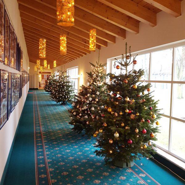 Die Weihnachtsbäume sind da!