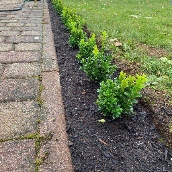 Unsere Terrasse wird grün